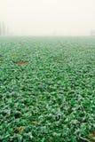 Gemüse eingefroren an einem kalten Tag Lizenzfreies Stockfoto