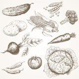 Gemüse eingestellt Stockbild
