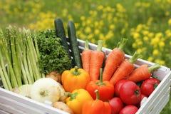 Gemüse, Ernte stockbilder