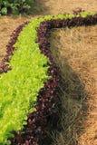 Gemüse für Salat Lizenzfreie Stockbilder