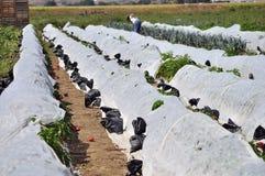 Gemüse geschützt vor Frost Stockbild