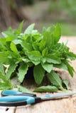 Gemüse, grünes Gemüse, Basilikum Stockfoto