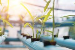 Gemüse-Hydroponik, die im Ackerlandhintergrund bewirtschaftet Organisches F Lizenzfreies Stockfoto