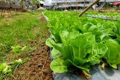 Gemüse im Biohof Stockbilder