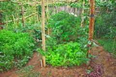 Gemüse im Biohof des Ackerlands in Thailand Lizenzfreie Stockbilder