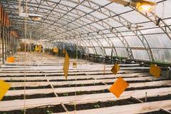 Gemüse im Gewächshaus in den Betten und in den Kästen Lizenzfreie Stockbilder