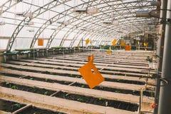 Gemüse im Gewächshaus in den Betten und in den Kästen Lizenzfreies Stockbild