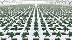 Gemüse im sauberen weißen Treibhaus stock video footage