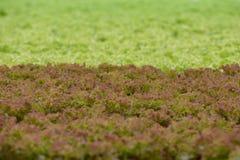 Gemüse im Wasserkulturbauernhof Lizenzfreie Stockfotografie