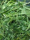 Gemüse-Indien Stockfoto