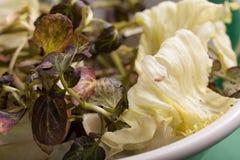 Gemüse Kopfsalat und Brunnenkresse Lizenzfreie Stockfotos