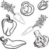 Gemüse, Linien, gezeichnet, stilisiert, Gemüse, Vektor stock abbildung