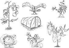 Gemüse mit Gewächshaus Stockfoto