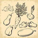 Gemüse-Piktogramme eingestellt Lizenzfreie Stockbilder