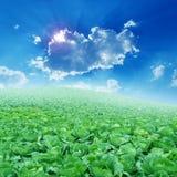 Gemüse und blauer Himmel Lizenzfreies Stockbild