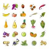 Gemüse und Früchte vektor abbildung