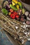 Gemüse und Knoblauch Lizenzfreie Stockfotografie