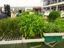 Gemüse und Kräuter für Verkauf am Markttag in Cascais - Portugal stockbild