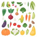 Gemüse vector gesunde Nahrung vegetably des Tomatenpfeffers und -karotte für die Vegetarier, die biologisches Lebensmittel von es Stockbilder