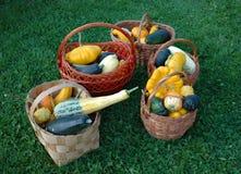 Gemüse von einem Gemüsegarten. Lizenzfreie Stockfotografie