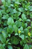 Gemüseanlage Stockbild