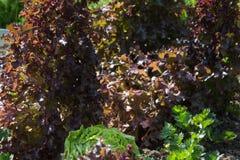 Gemüseanlagen auf einem Häuschengarten Lizenzfreie Stockbilder