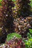 Gemüseanlagen auf einem Häuschengarten Stockfotografie