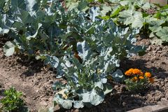 Gemüseanlagen auf einem Häuschengarten Stockfotos