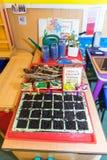 Gemüseanlagen, die nach innen in den Töpfen wachsen Lizenzfreie Stockfotos