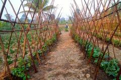Gemüsebau lizenzfreie stockfotografie