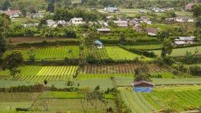 Gemüsebauernhöfe in Gundaling, Brastagi, Indonesien Lizenzfreies Stockbild