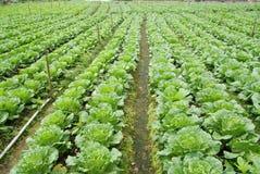 Gemüsebauernhof Stockfoto
