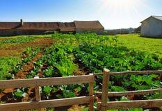 Gemüsebauernhof Stockbild