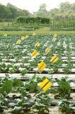 Gemüsebauernhofforschung Stockfotos