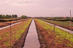 Gemüsebett mit Abzugsgraben für Bewässerung Lizenzfreie Stockfotografie