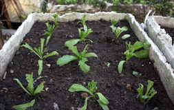 Gemüseeintragfäden Stockbilder