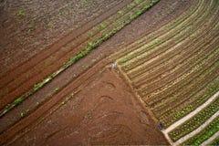Gemüsefeld Lizenzfreie Stockfotos