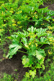Gemüseflecken Lizenzfreie Stockbilder