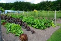 Gemüseflecken und Gewächshaus Stockfotografie