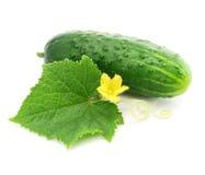 Gemüsefrucht der grünen Gurke mit den Blättern getrennt Lizenzfreie Stockfotos
