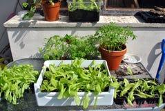 GemüsegärtnerArbeitsplatz Stockbilder
