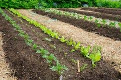 Gemüsegarten stockfotografie