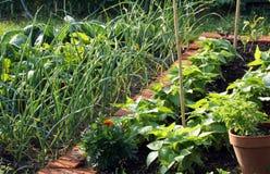 Gemüsegarten Stockbild