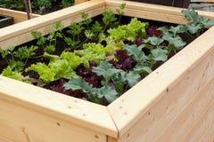 Gemüsegarten Lizenzfreies Stockfoto