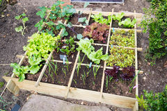 Gemüsegarten Lizenzfreies Stockbild