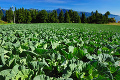 Gemüsegarten Lizenzfreie Stockfotos