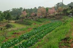 Gemüsegarten auf Berg Lizenzfreie Stockfotos