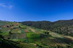 Gemüsegarten auf dem Berg in Thailand Stockbild