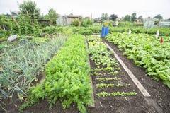 Gemüsegarten-Betten Stockbilder