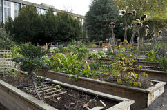 Gemüsegarten der Stadt Lizenzfreies Stockbild